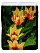 Beautiful Bicolor Tulips Duvet Cover
