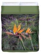 Beautiful Bird Of Paradise Flower In Bloom Duvet Cover