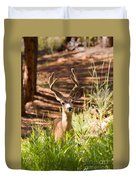Beautiful Buck Deer In The Pike National Forest Duvet Cover