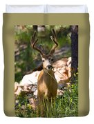 Beautiful Buck In The Pike National Forest Duvet Cover