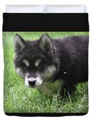 Beautiful Furry Black And White Alusky Only Two Months Old  Duvet Cover