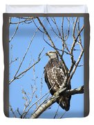 Beautiful Juvenile Eagle Duvet Cover