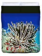 Beautiful Marine Plants 11 Duvet Cover by Lanjee Chee