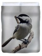 Beautiful Pose - Black-capped Chickadee Duvet Cover