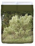 Beautiful Tree At Autumn  Duvet Cover