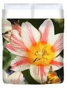 Beautiful Tulip With A Yellow Center And Pink Striped Petals Duvet Cover
