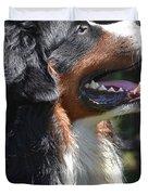 Bernese Mountain Dog Basking In The Sunshine Duvet Cover