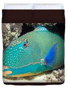 Bicolor Parrotfish Duvet Cover