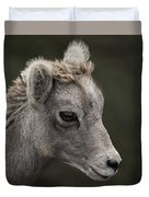 Big Horn Lamb Duvet Cover