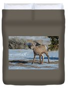 Bighorn Lamb 2 Duvet Cover
