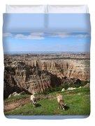 Bighorn Sheeps At Sage Creek Duvet Cover
