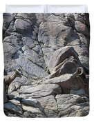 Bighorns Romantic Stare Duvet Cover