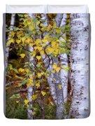 Birch In Autumn Duvet Cover
