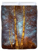 Birch Tree In Golden Hour Duvet Cover