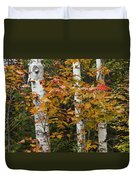 Birches In Fall Duvet Cover