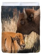 Bison Calf And Its Mother Duvet Cover