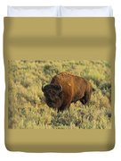 Bison Duvet Cover by Sebastian Musial