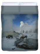 Bison Walking In Front Of Lion Geyser Duvet Cover