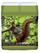 Black Abert's Squirrel - Half And Half Duvet Cover