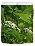 Black Elderberry - Sambucus Nigra_0261black Elderberry - Sambucus Nigra Duvet Cover