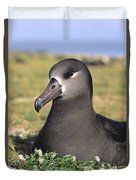 Black Footed Albatross Duvet Cover