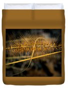 Black Pennisetum In Setting Sun Duvet Cover