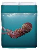 Black Sea Nettle Chrysaora Achlyos Duvet Cover