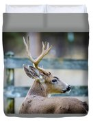 Black-tailed Buck Duvet Cover