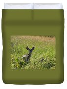 Black-tailed Deer In Tall Meadow Grass Duvet Cover