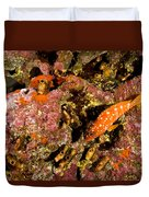 Blacktip Grouper Epinephelus Fasciatus Duvet Cover