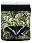 Blue-banded Swallowtail Butterfly Duvet Cover
