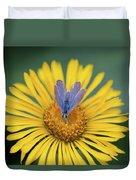Blue Butterfly On Alpine Sunflower Duvet Cover