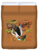 Blue-footed Boobie Display Duvet Cover