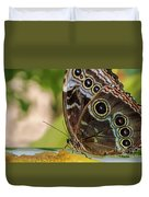 Blue Morpho Butterfly Morpho Peleides  Duvet Cover