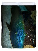 Blue Parrot Fish Duvet Cover