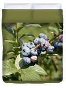 Blueberries On Blueberry Bush Duvet Cover