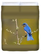 Bluebird Bliss Duvet Cover
