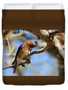 Bluebird Curiousity Duvet Cover