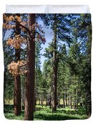 Bluff Lake Ca Fern Forest 3 Duvet Cover