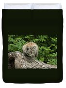 Bobcat Kitten Exploration Duvet Cover by Sandra Bronstein