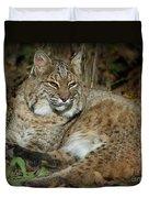Bobcat Warming In The Autumn Sun Duvet Cover