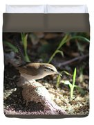 Breswick Wren On Tree Root 2 Duvet Cover