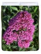 Brilliant Hot Pink Flowering Phlox Flowers In A Garden Duvet Cover