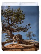 Bristle Cone Tree Duvet Cover