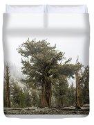 Bristlecone Elder Duvet Cover