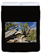 Bristlecone Great Basin Landscape Duvet Cover