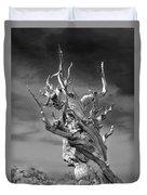 Bristlecone Pine - A Survival Expert Duvet Cover
