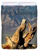 Bristlecone Pine Down Duvet Cover