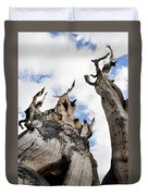 Bristlecone Pine Great Basin Duvet Cover