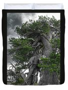 Bristlecone Pine Tree On The Rim Of Crater Lake - Oregon Duvet Cover